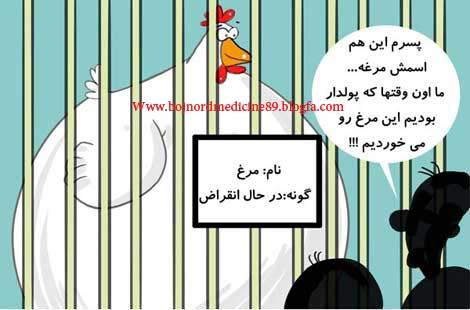 قیمت مرغ کاریکاتور
